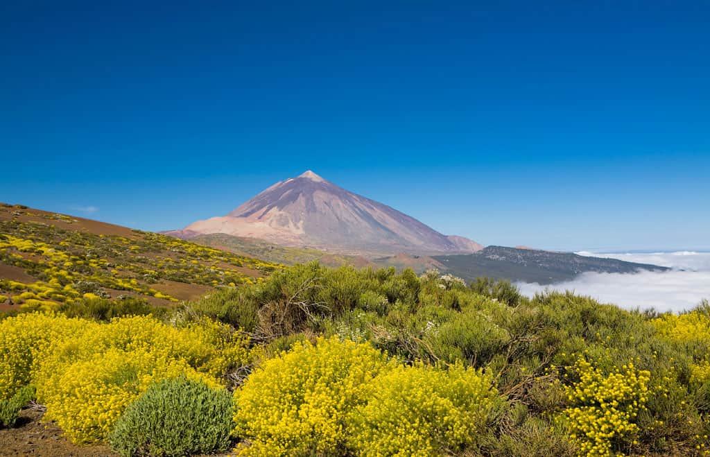 Best Shore Excursions In Tenerife For Families