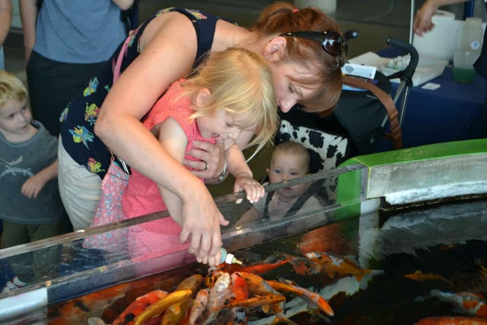 Feeding fish at L'Aquarium Barcelona - things to do in Barcelona with kids