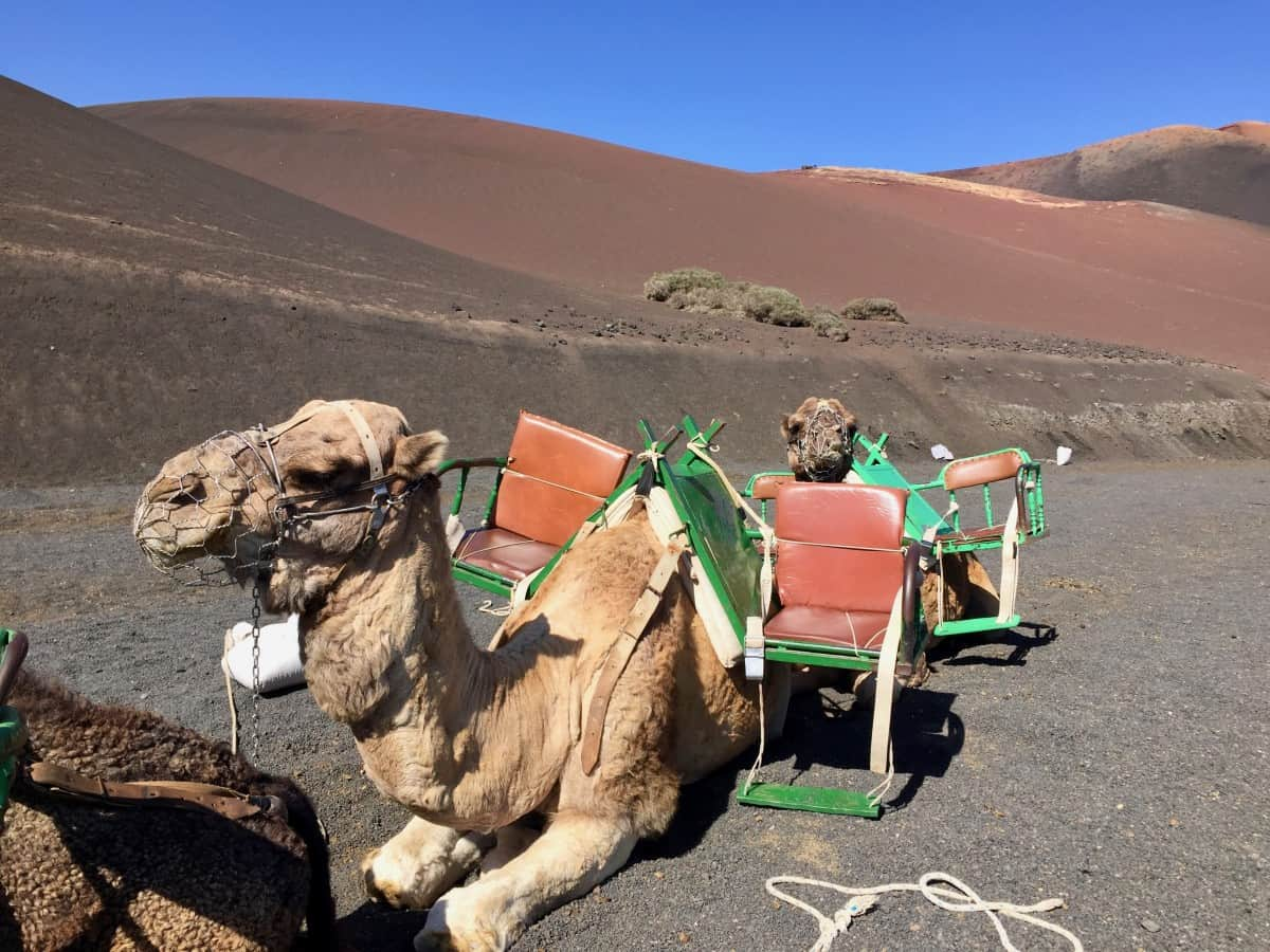 Tried and Tested Shore Excursions in Lanzarote